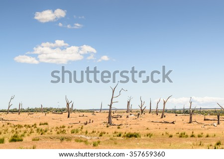 Desolate landscape with crows perched in dead trees. East coast, Tasmania, Australia - stock photo