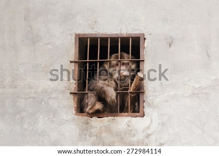 Despairing monkey being trapped in a cage - stock photo