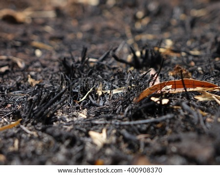 Destroyed by burning forest. - stock photo