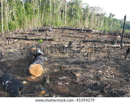 Destroyed by burning tropical rainforest in Amazonia (Photo taken 20/01/2010) - stock photo
