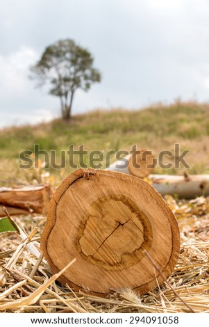 Destroyed forest by Humans - stock photo