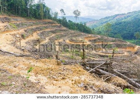 Destroyed forest for agriculture. - stock photo