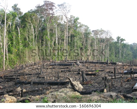 Destroyed tropical rainforest in Amazonia Brazil. Image taken on 20 January 2010 - stock photo
