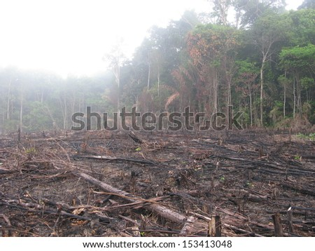 Destroyed tropical rainforest in Amazonia.  Image taken on 20 January 2010  - stock photo