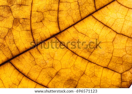 detail and texture from leaf macro