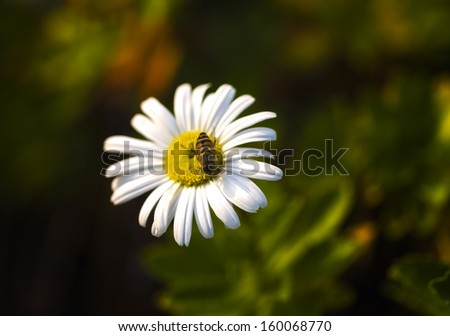 Detail of a bee on a flower - stock photo