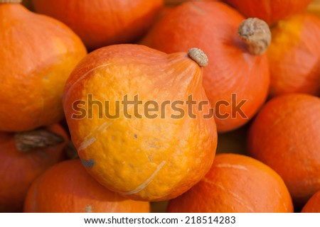 Detail of a bunch of colorful hokkaido pumpkins.