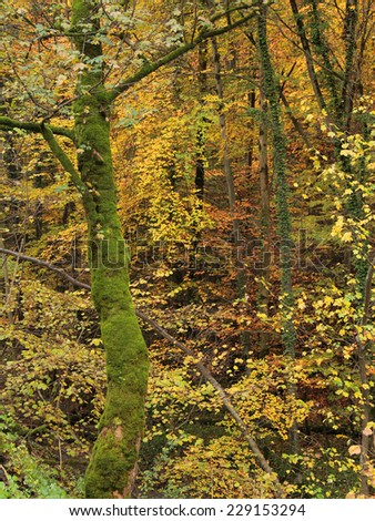 detail of a colorful forest including a mossy overgrown tree trunk at autumn time in Southern Germany - stock photo