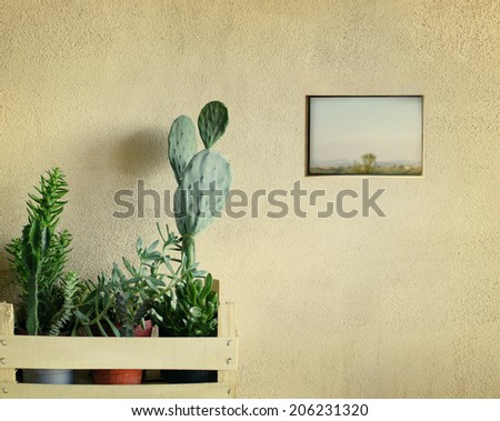 Detail of a few succulents plants in a basket with a little window on country landscape view  - stock photo