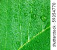 Detail of a fresh wet green leaf with water drops - stock photo