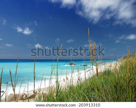 Detail of a grass plant at the beach - stock photo