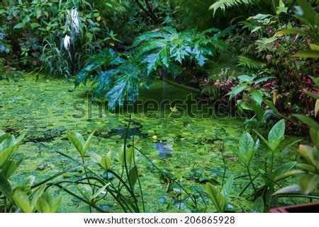 detail of a green pond with water plants - stock photo