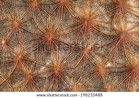 Detail of a large sponge growing on a coral reef in the Caribbean Sea. Sponges of all shapes, sizes, and colors often dominate Caribbean reefs. - stock photo