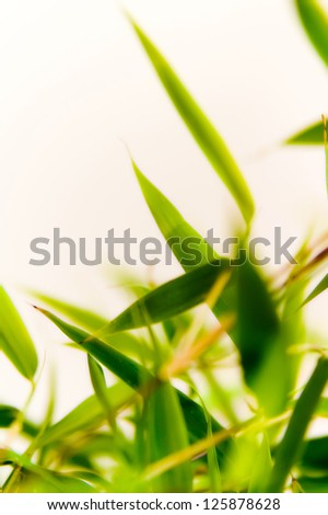 Detail of a light green bamboo plant.