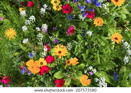 Detail of a meadow with colorful flowers - stock photo