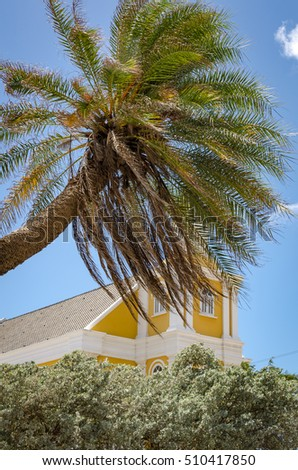 Detail of a Palm tree alone in Curacao with the blue sky and cloud as background in Caribbean