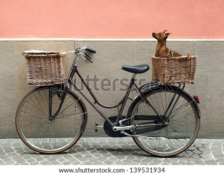Detail of a parking bicycle with two basket with a chihuahua little dog inside of one of them - stock photo