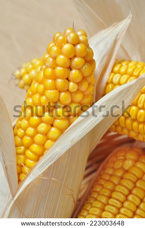 detail of a ripe corncob