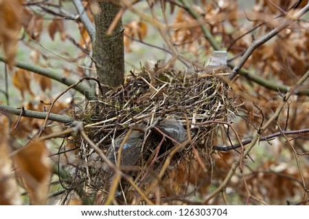 Detail of a small birds nest in a bush. - stock photo