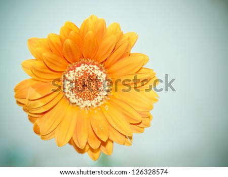 Detail of a small orange aster flower. - stock photo
