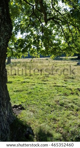 Detail of a tree in a meadow with copy space