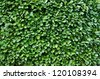 Detail of a trimmed bush - stock photo