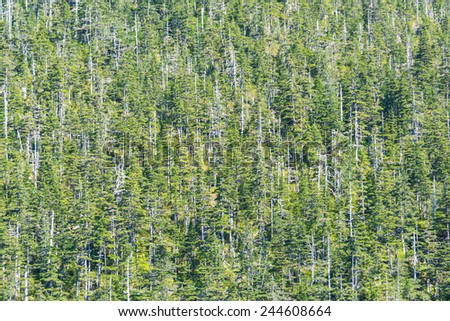Detail of a wood in Alaska with some dead trees, picture filling. - stock photo