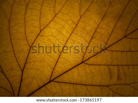 detail of a yellow autumn leaf in backlight