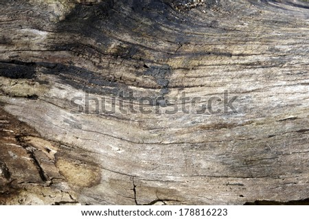 Detail of an old weathered tree trunk