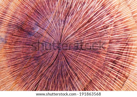 Detail of annual rings of a tree - stock photo