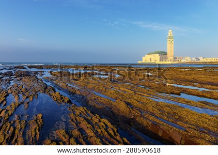 Detail of bare rocks because of low tide at casablanca, morocco