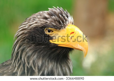 detail of black eagle head on the green background - stock photo