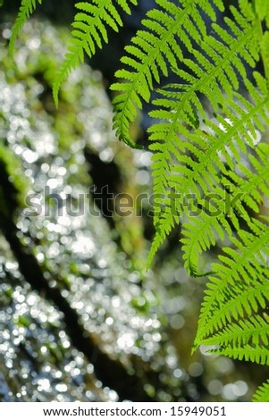Detail of bracken a shallow DOF