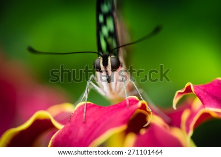 Detail of butterfly resting on red flower - stock photo