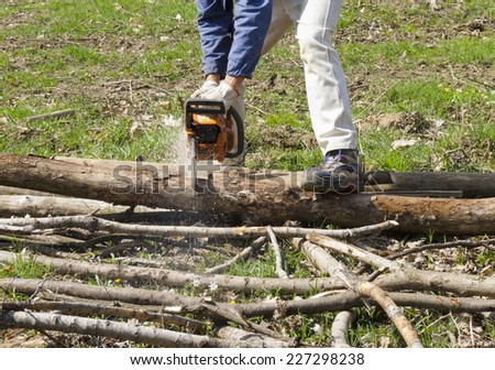 detail of chainsaw cutting a trunk