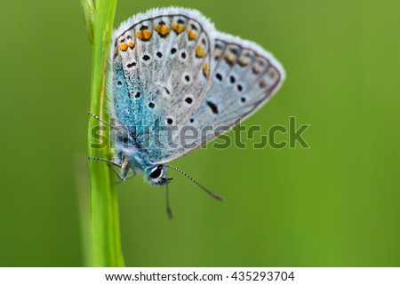 Detail of colorful butterfly sitting on a blade of the grass with nice green background