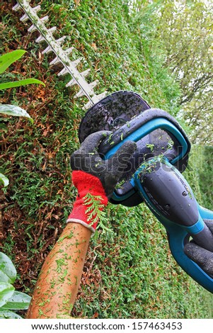 detail of cutting thuja hedge with hedge clippers,
