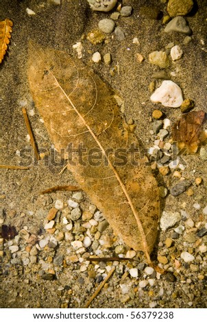 Detail of decaying leaf underwater with sand and shells background
