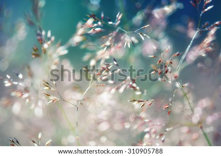 Detail of different flowering grasses.