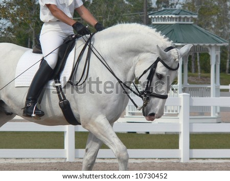detail of dressage rider on white percheron horse in show ring - stock photo