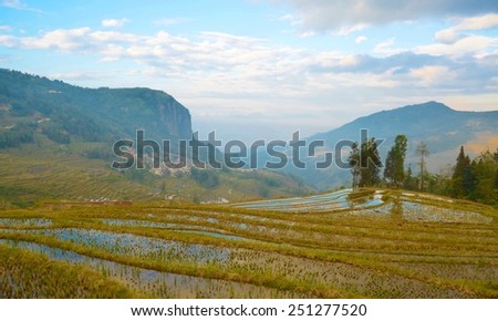 Detail of famous yuanyang rice terraces in yunnan province in china. - stock photo