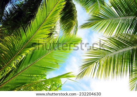 detail of fresh coconut leaf - stock photo
