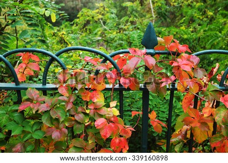 Detail of garden fence with colorful vegetation in Autumn season - stock photo