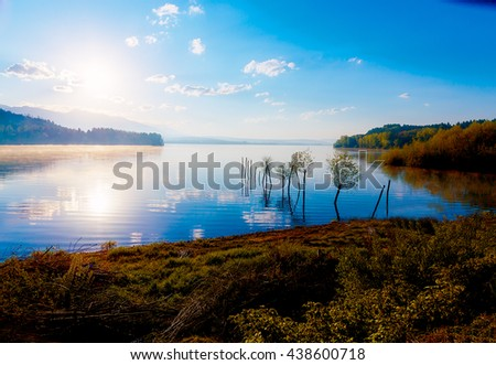 detail of grass halm at a lake in magical morning time with dawning sun. Trees as leftovers of a mole - stock photo