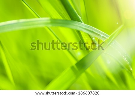 detail of grass in the morning sun - stock photo