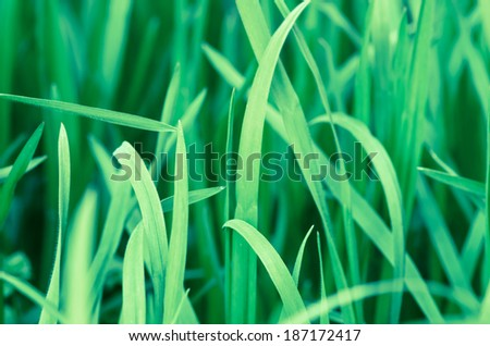 detail of green grass image