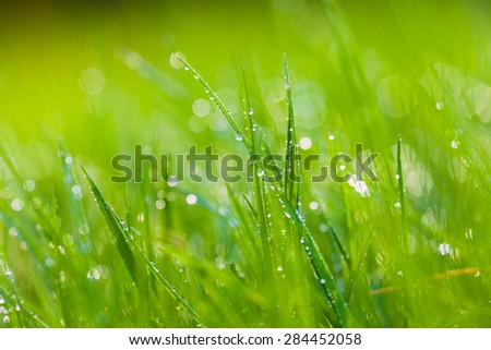 detail of green grass with sparkling dewdrops - stock photo
