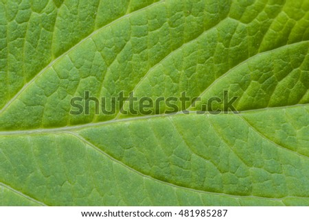 Detail of green leaf texture.