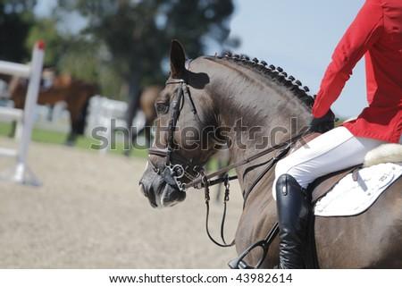 Detail of horseman and chestnut horse. Sport track - stock photo