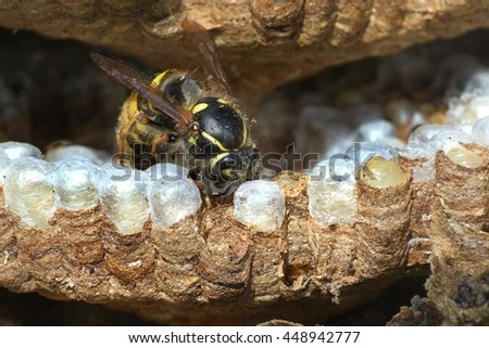 Detail of inside of wasp nest.
